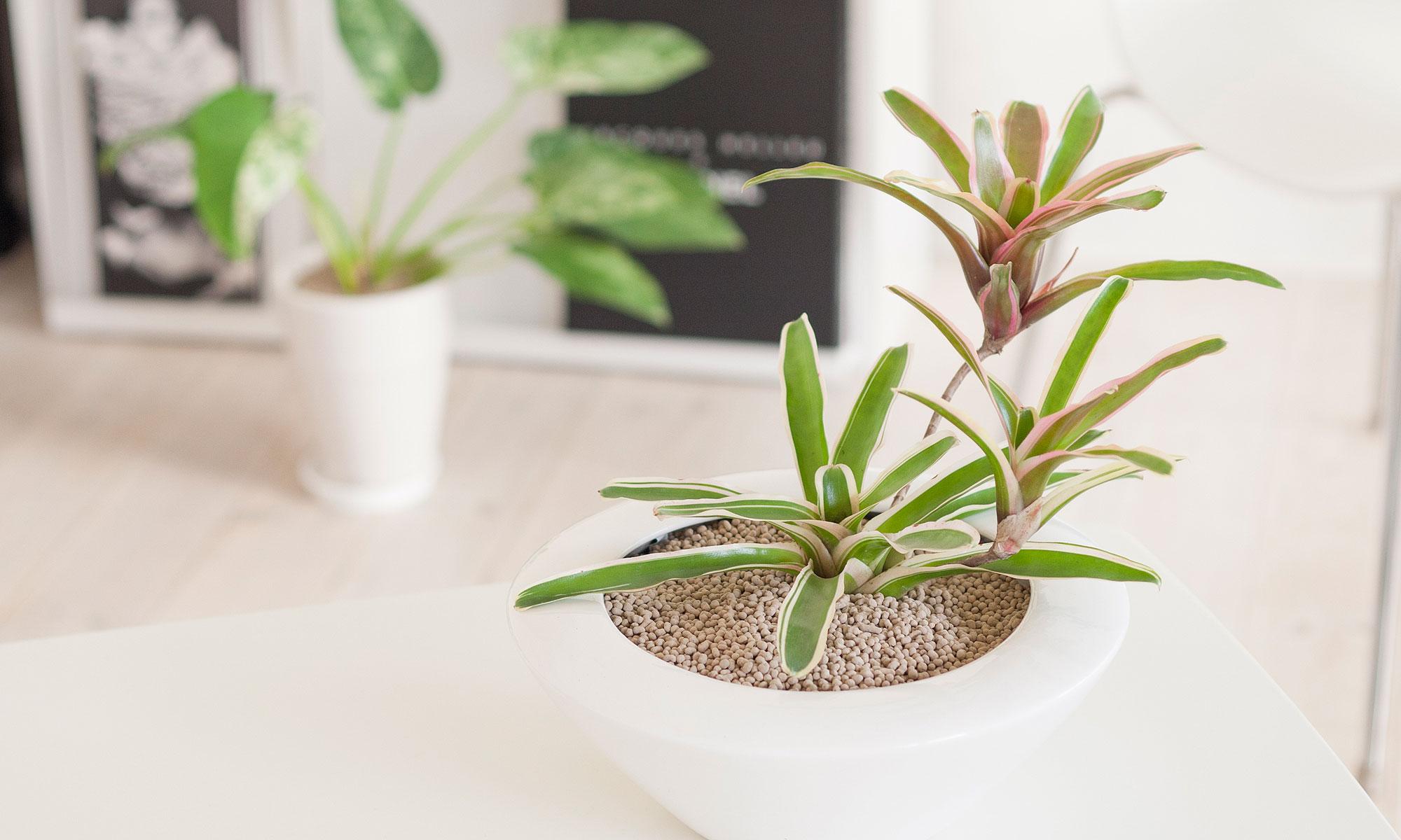 チャコボール|観葉植物などに最適な室内でご利用いただける新しい園芸用土です。